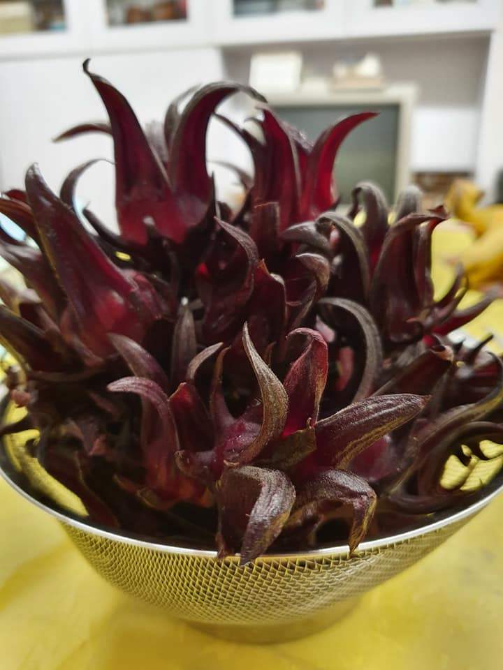 Freshly harvested Roselle
