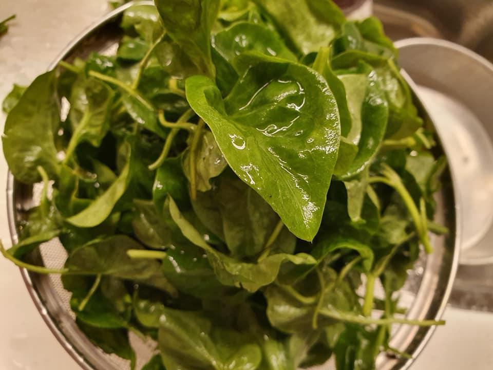 Mu-Er-Cai 木耳菜, aka Ceylon Spinach