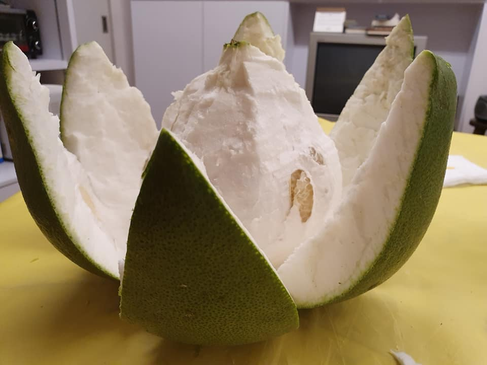 Opening Pomelo
