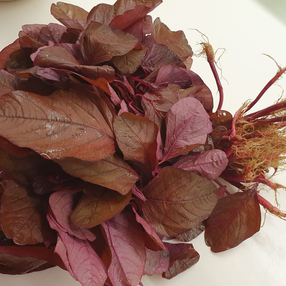 A big bundle of Red Spinach